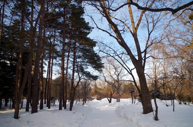 北海道的晴与雪,道南6日游记