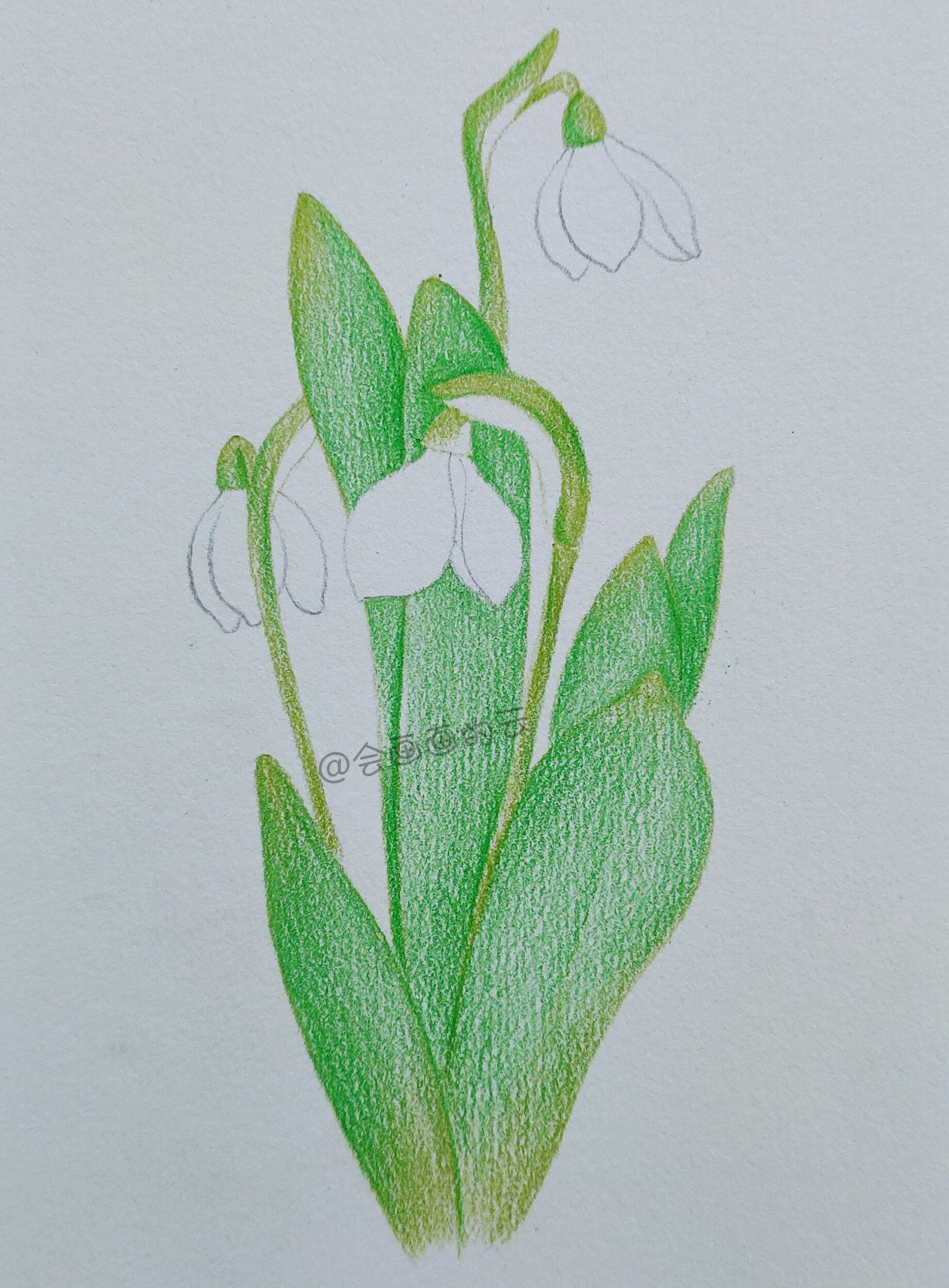 彩铅手绘详细步骤图,清新芬芳的白色小花